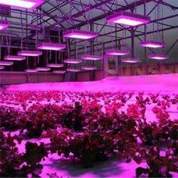 Növényvilágító fénycső